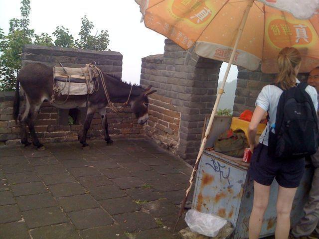 Åsna på kinesiska muren